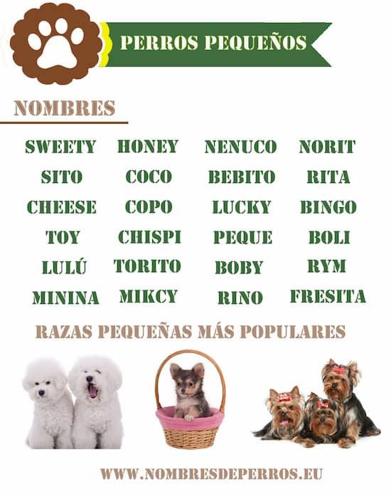 Hondennamen reu