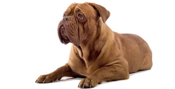 namen voor sterke honden